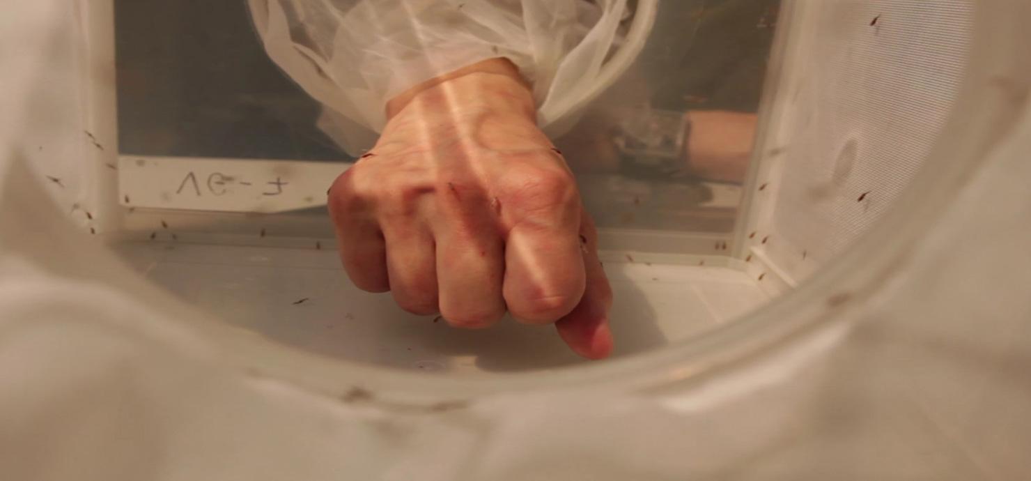 main-moustique
